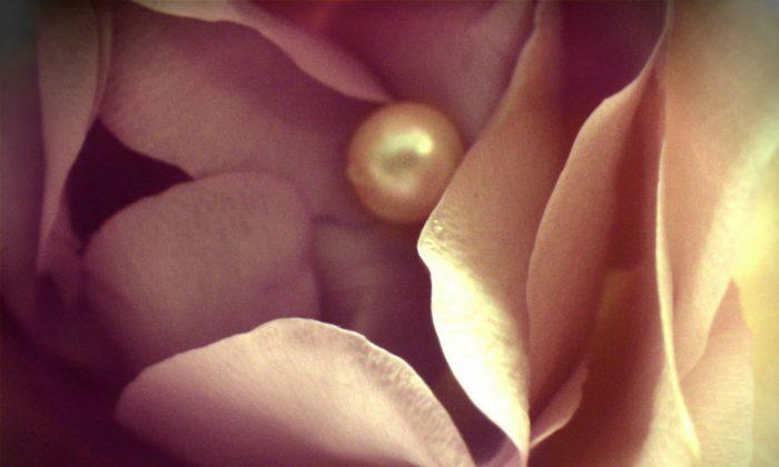 Rosa y perla. (CC0 Dominio Público)