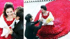 Con 9999 rosas reales confecciona el vestido de su novia para hacerle la propuesta de su vida