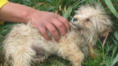 Unos niños encuentran a este perro y piensan que está muerto, luego son testigos del lindo rescate