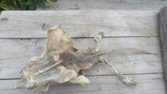 Pide ayuda para identificar criatura de alas, filosos dientes y espinas y las teorías son geniales