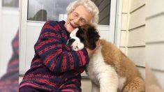 Una anciana recupera la alegría gracias a las divertidas visitas del cachorro gigante de su vecino