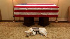 La foto del perro del expresidente George H.W. Bush cuidando su ataúd impacta al mundo