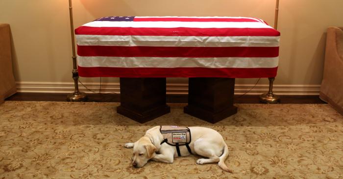 Sully, el perro de servicio que trabajó para el fallecido expresidente George H. W. Bush. EFE/Foto cedida por la Oficina George H.w. Bush/Eva