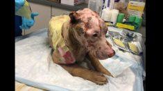 Encuentran a este perrito cubierto de sangre, luego descubren que sufre quemaduras químicas