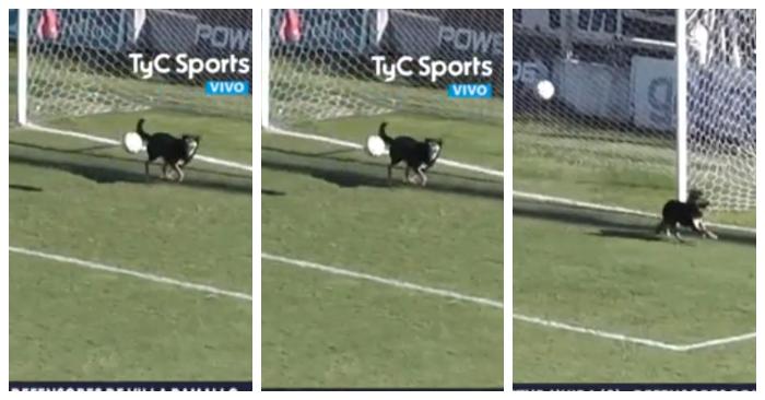 Este perro evita un gol sobre la línea y es considerada la atajada del año