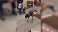 Filman perro policía estrenado nuevas botas de nieve antes de salir a cumplir con su deber