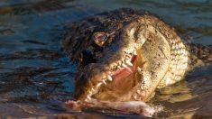 Esposa grita desesperada por auxilio cuando ve que hay un cocodrilo comiéndose a su esposo