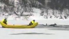 Filman instante en que un bombero se lanza a un río congelado para salvar a un bebé ciervo atrapado