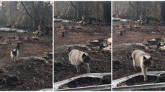 Gatita recibe a su familia en la casa quemada un mes después del incendio en California