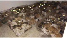 Salvan 375 gatos a punto de ser decapitados para el comercio ilegal de carne en China