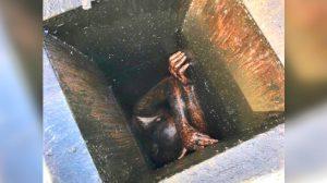 Rescatan hombre atrapado dentro de respiradero de restaurante chino cerrado hace meses en EEUU