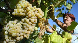 Empresa que convirtió el agua en vino desafía el mercado y cautiva a todos en España