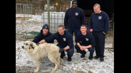 Usando un traje especial rescatan de morir congelado a este perro que cayó en un estanque