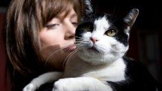 Estudio demuestra que los gatos prefieren a los humanos antes que la comida
