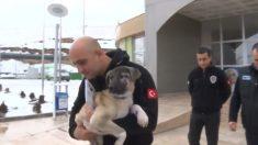Cachorro rescatado de un lago congelado es adoptado por el buzo que le salvó la vida