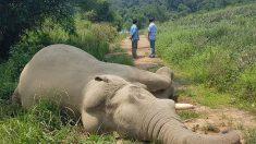 India: Incendian a bebés elefantes con bolas de fuego