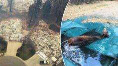 Un caballo rescatado de una piscina sobrevive al incendio forestal más mortífero de California