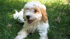 Cientos de perros abandonados son salvados gracias a la destreza y el amor de un equipo de rescate