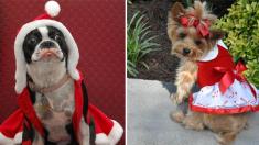 ¿Listo para Navidad? Si tú no lo estás, estas adorables mascotas están listas para las fiestas