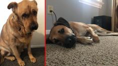 Este perrito cae en depresión por la muerte de su amo, pero alguien llega a tiempo para salvar su vida
