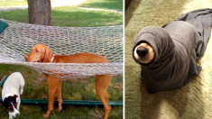 La inocencia y la ternura de estas mascotas en apuros les alegran el día a cualquiera