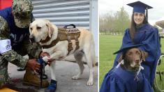 Estos valientes perros son ángeles guardianes y sus heroicas acciones te dejan sin palabras