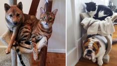 ¿Perritos con una actitud 'miau'? Mira estos 9 divertidos caninos que se creen gatos