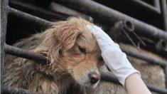 Video: Encuentran perro atado a un árbol en estado esquelético y de abandono