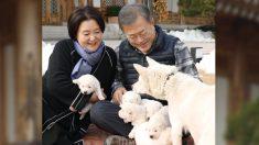 """Mira los cachorros de la perrita que los norcoreanos enviaron como """"regalo de paz"""" a Corea del Sur"""
