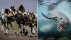 Se abrieron votaciones populares para elegir la mejor foto de vida silvestre 2018 ¡Vota tu favorita!