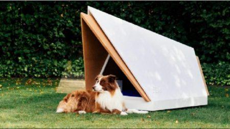 Crean casa para perros anti-estrés: aísla totalmente el sonido de fuegos artificiales