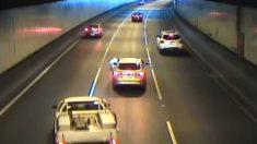 Video: Perro cae de un auto y apenas evita ser atropellado en un túnel de Australia
