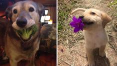 Te vas a derretir con estas abordables mascotas que expresan gratitud con regalitos para sus dueños