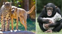 ¡Los polos opuestos se atraen! Estos 9 insólitos lazos de amor entre animales lo comprueban
