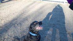 Perro perdido vuelve a casa y trae de su aventura otro perro y una cabra
