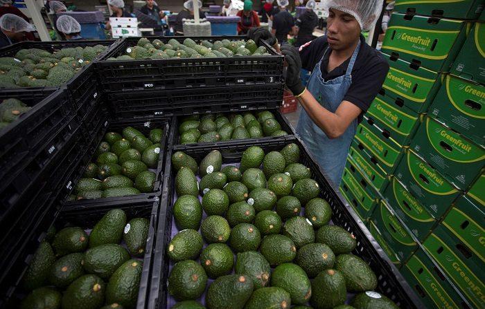 Productores de México de aguacate garantizan demanda en EE.UU. para el Super Bowl LIII