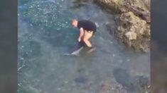 Rescatan delfines desorientados en las rocas de la costa de Nueva Zelanda