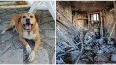La familia cree que el gato murió en el incendio pero su perro le demuestra lo contrario