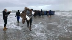 270 contenedores caen de un barco e inundan playas de Holanda con miles de artículos gratis