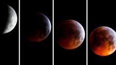 La Luna se tiñó de rojo en el único eclipse total en América: imágenes alrededor del mundo