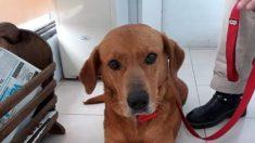 Este es Juan, y su familia adoptiva lo devolvió a los 10 días por una insólita razón