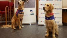 España prueba con éxito perros para ayudar a las personas a dejar la adicción al alcohol