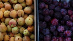 Retiran toda la fruta chilena de los supermercados de EE. UU. por posible contaminación con listeria