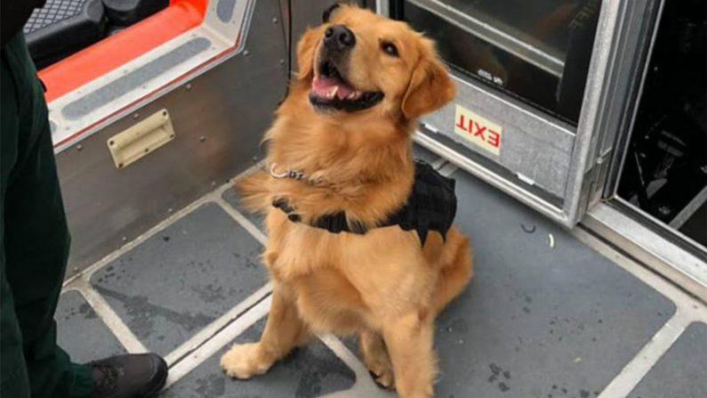 Perro antidrogas termina con sobredosis tras inspeccionar fiesta electrónica en un yate en EEUU