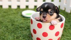 Estudios revelan, ¿por qué queremos apretar y morder a los cachorros cuando nos parecen tan lindos?