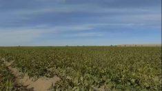Bajas temperaturas provocan daños en cultivos del noroeste de México
