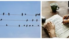 Compositor brasilero se inspira en las aves de los cables eléctricos y crea maravillosa pieza musical