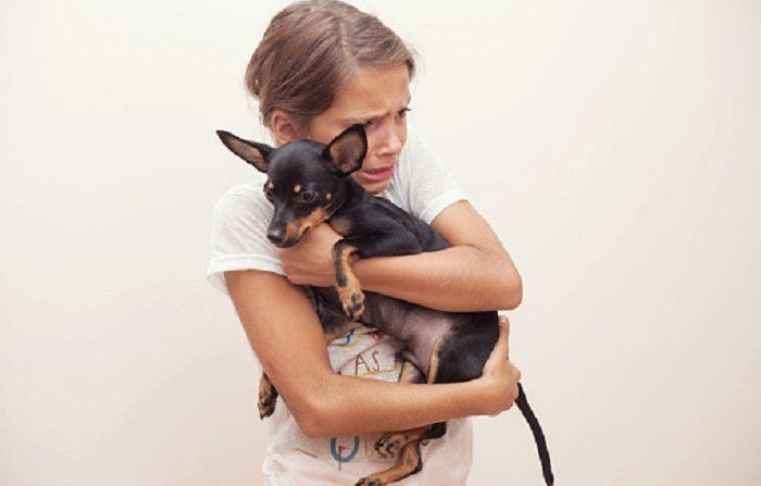 Imagen de contexto de perro rescatado. (Photo by Scott Eisen/Getty Images)