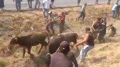 Choca camión de reses en Veracruz y la gente roba y faena el ganado en el lugar