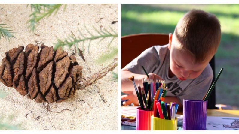 """Niño reflexiona y escribe una disculpa a un parque nacional después de llevarse una """"piña"""" a casa"""